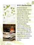 14. WVU Herbarium