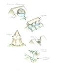 Alpine_erosion by John J. Renton and Thomas Repine